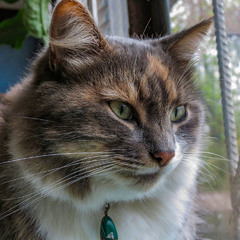 Портрет любимой кошки...