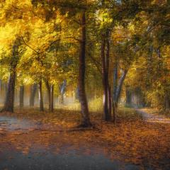 Осеннее утро в лесу