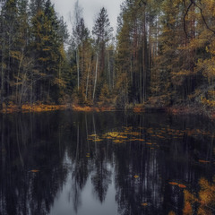 Черное зеркало. Мрачные сказки темного леса