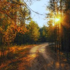 По золотым дорожкам осени