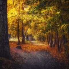 Волшебный осенний лес
