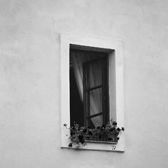 Окно c красными цветами