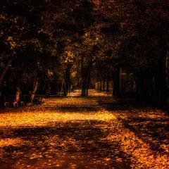 Осень это просто красивая клетка, но в ней я уже кажется был...