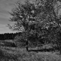 Ахроматический пейзаж