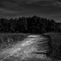 Светлый путь в тёмный лес