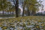 На межі осені й зими...