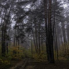 Ранок у лісі...