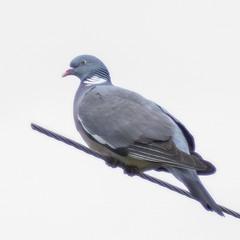 А хто знає цього птаха?
