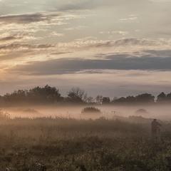 Вівці мої, вівці... Миколині тумани