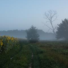 """""""Миколині тумани"""" - По ранковій дорозі"""