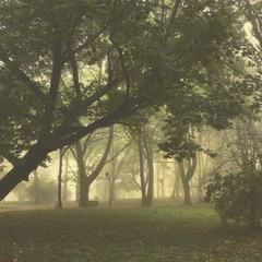 Ранок в старому парку