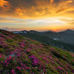 Цвіте і квітне Чорногора!!!