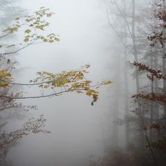 Погляд в осінь..