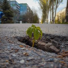 Весна везде пробьёт себе дорогу!