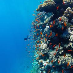 Вдоль рифа