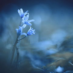 Весняна казка