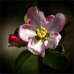 Про квіточки і бруньки...