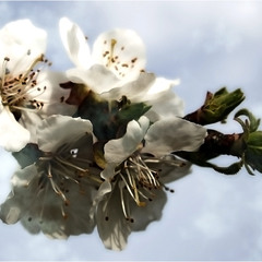 Весняний цвіт...