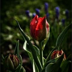 Кольорова весна...