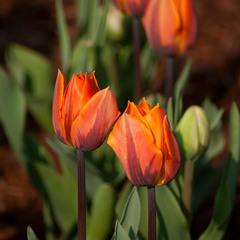 весны мгновенья