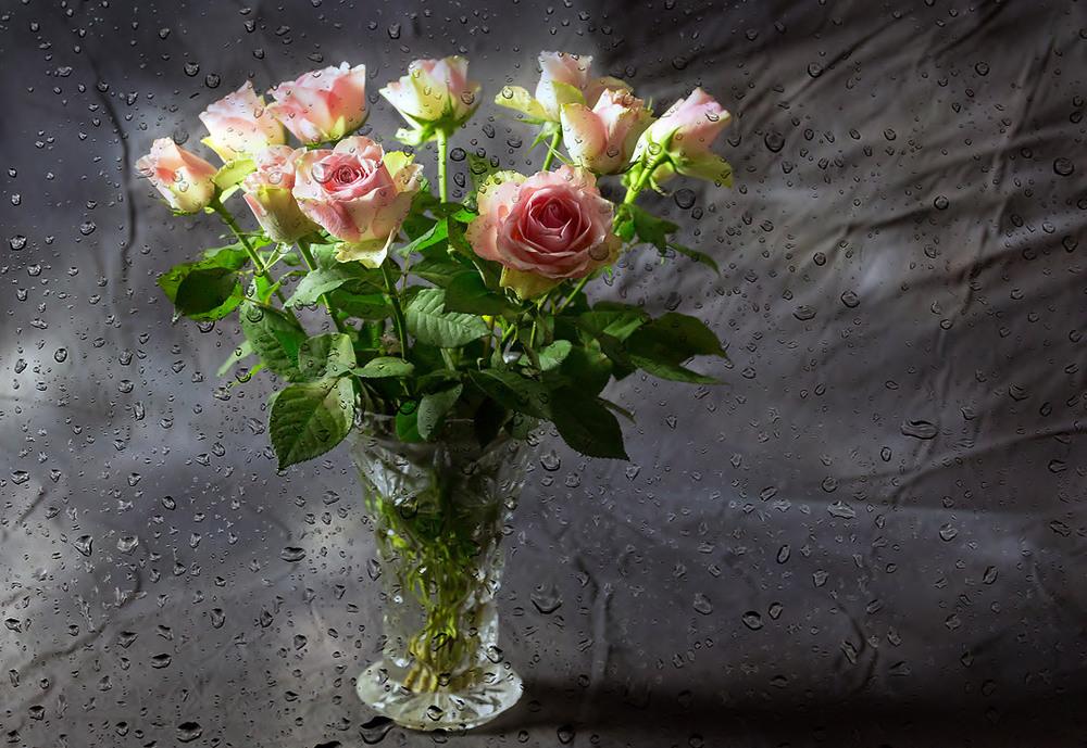 розы под дождем фото обои