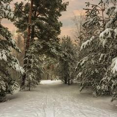 вечір в зимовому лісі