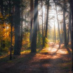 сонячна осінь