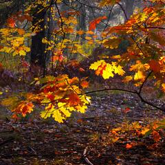 осінні фарби