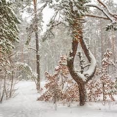 прогулки в зимнем лесу