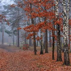 прогулянка в осінь