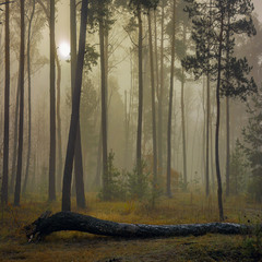 осінні тумани (2)