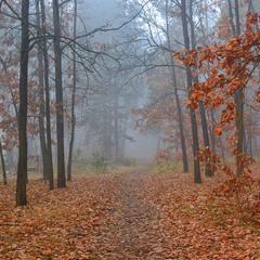 прогулянка осінніми стежками