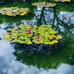 отражение с цветами