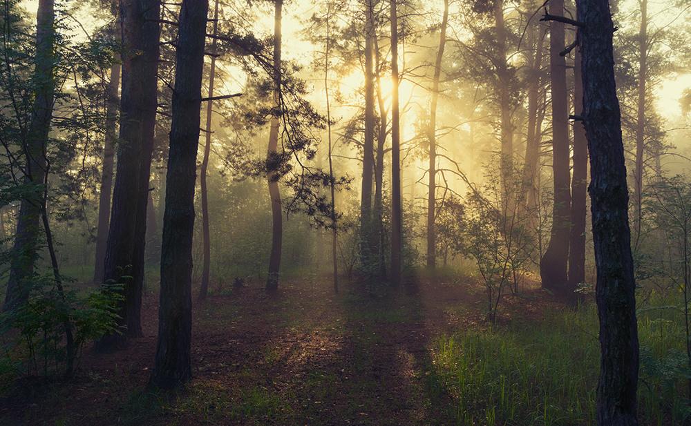 Самое красивое утро фото в лесу