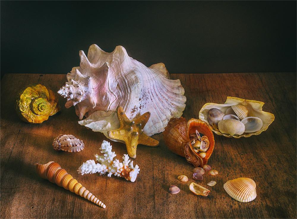 морские раковины рисунок фото том, что строить
