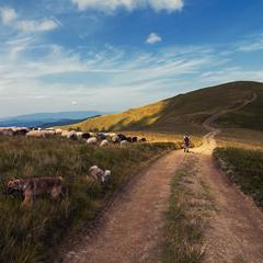 Про пастухів та подорожніх