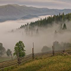 Пастка для туману