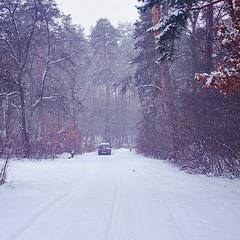 снежная дорога домой