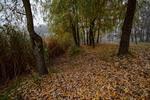 В туманную осень,ступая над озером...