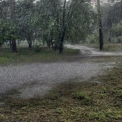Дикий дождь