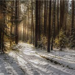 Сказочный лес Лапки