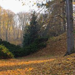 Осінь у парку.