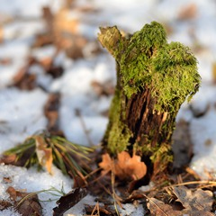 Лесной мамонтёнок :)
