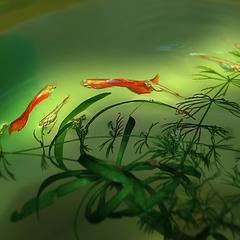 Чарівні рибки