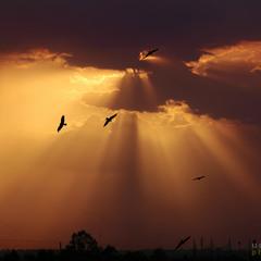 sun with bird