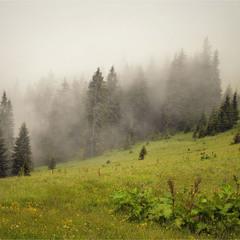 Лес-призрак