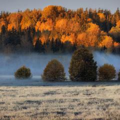 """""""Утро красит нежным светом..."""""""