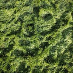 Зелёная шерсть