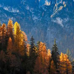 Сигнальные огни осени