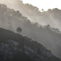 Деревья, что растут на скалах
